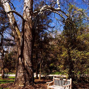 Spring Garden Bench by rollosphotos