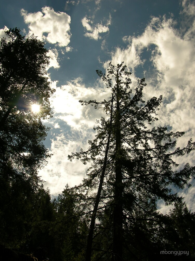 Magestic Pines by moongypsy