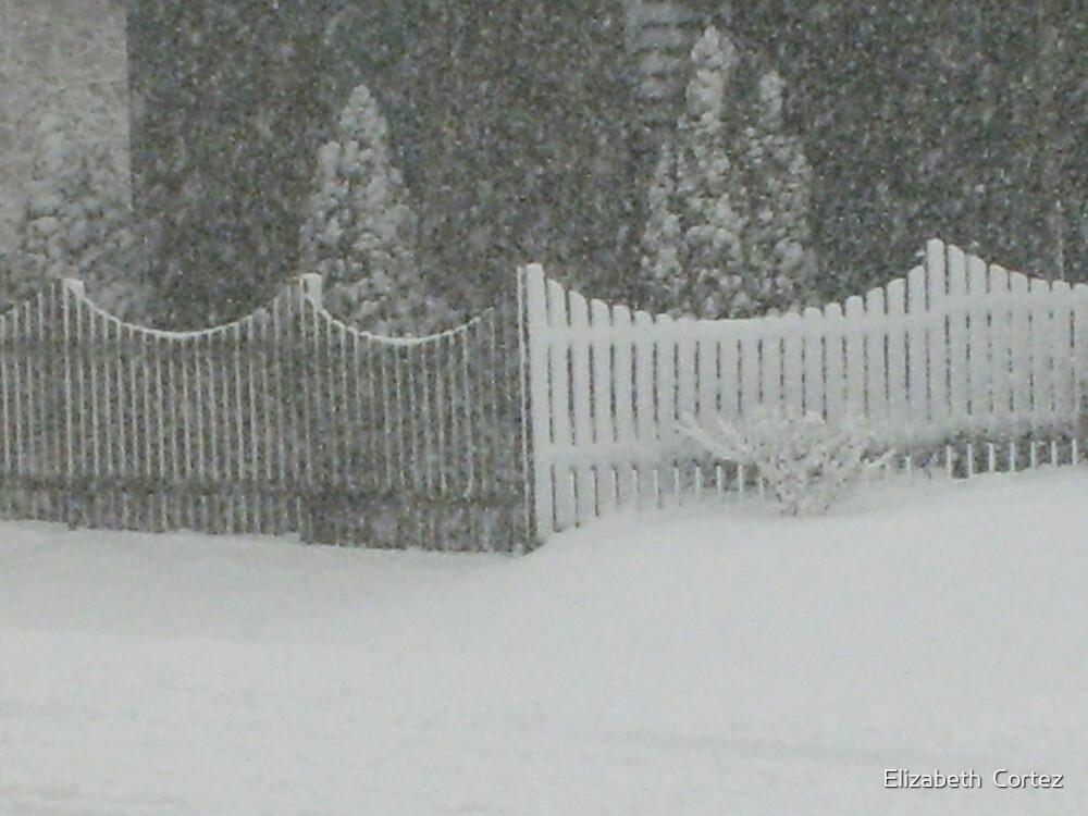 Snow Storm by Elizabeth  Cortez