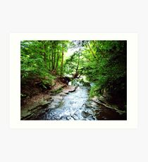 Shallow Creek Art Print