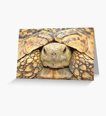 Tortoise Stare - Serious Intimidation of Fun Greeting Card