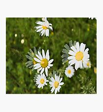 Daisies in a Blur Photographic Print