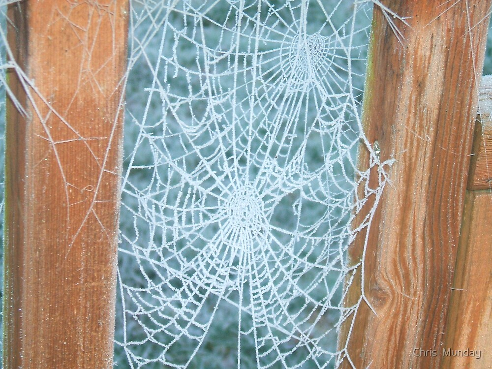 Frosted web by Chris  Munday