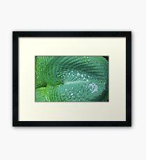 Raindrops Wellington Botanic Gardens New Zealand Framed Print