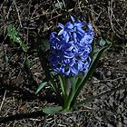 Heroic Hyacinth by VoxCeleste