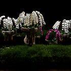 Waterfall Orchids by Adam Bykowski
