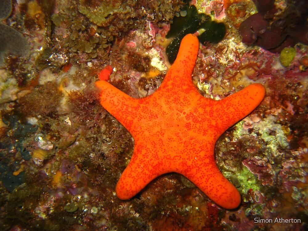 Starfish by Simon Atherton