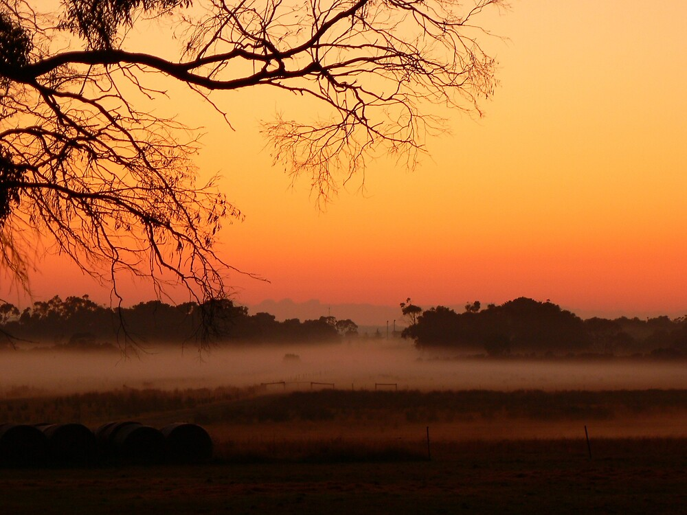Autumn Morning by Crissy
