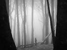 The Missing Slipper by Ben Loveday
