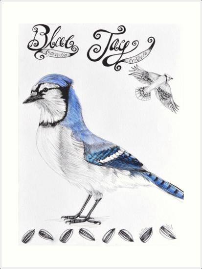 Blue Jay by maggiewarren