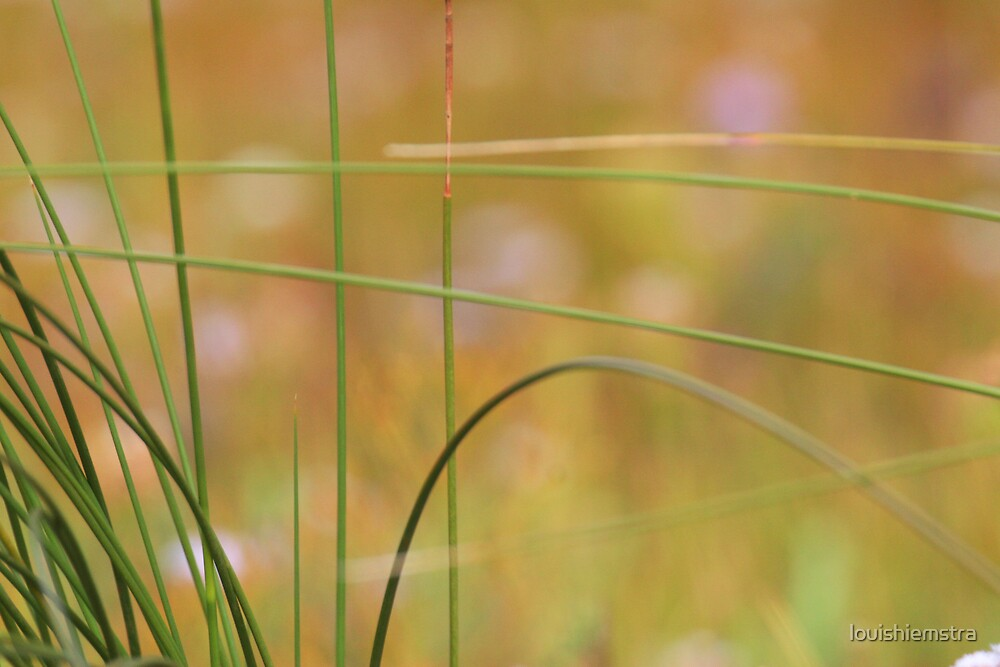 Grass by louishiemstra