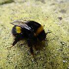 A bee by Tony Blakie