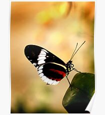 Cydno Longwing Poster