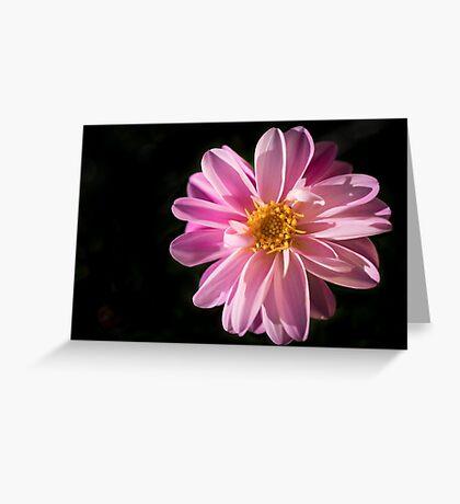 Sunshine on a Perfect Dahlia Greeting Card