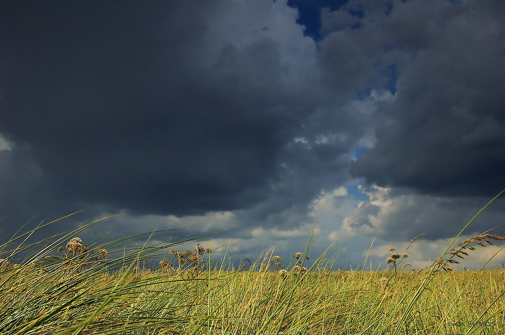 Glimpses of Summer by Glen Birkbeck