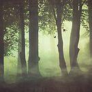 Wispy Forest Mists by Dirk Wuestenhagen