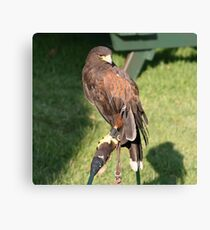 Harry the Hawk 1 Canvas Print