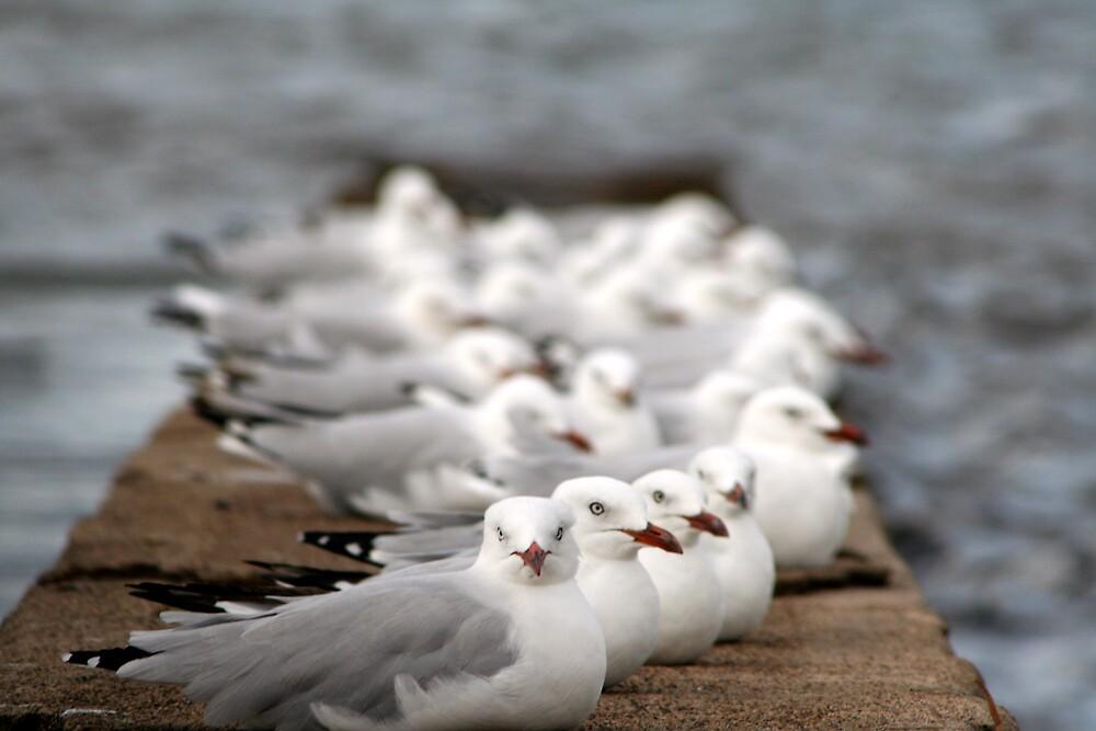 Seagulls at Wynnum by John Hansen