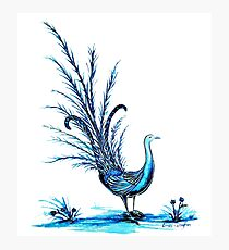 Lyrebird Photographic Print