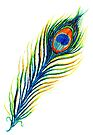 Peacock Feather by Linda Callaghan