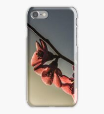 Afternoon Blossoms iPhone Case/Skin