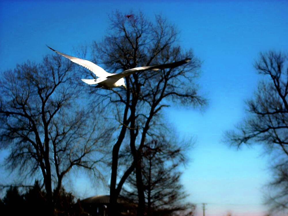 in flight by M.  Photography