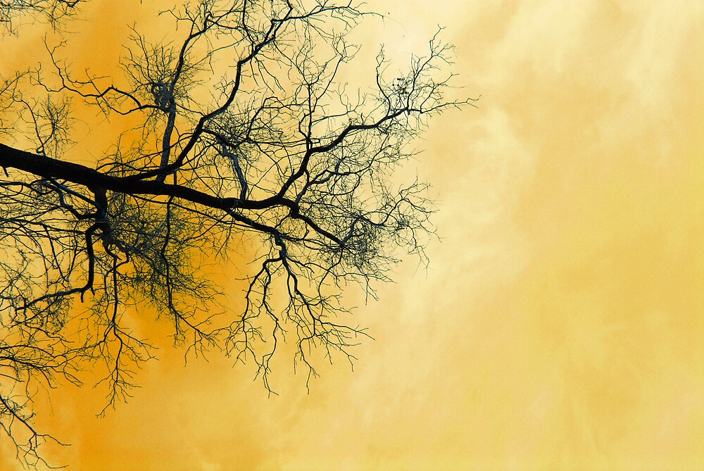 Yellow Treetop by Rod  Adams