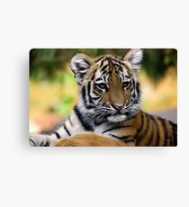 Styling Canvas Print