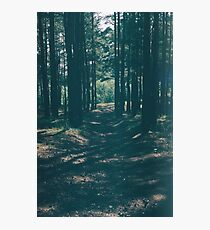 The Forest Photographic Print
