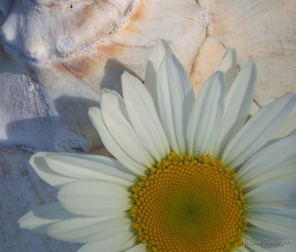 Daisy and Shell by Natalie Bollinger