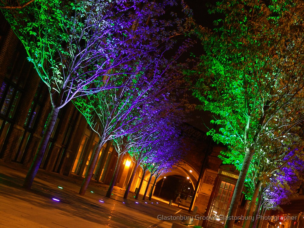 Trees At Night by Glastonbury Groove Glastonbury Photographer