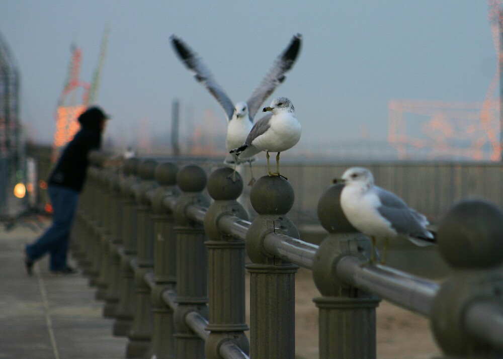 This place is for the birds! by SharonB