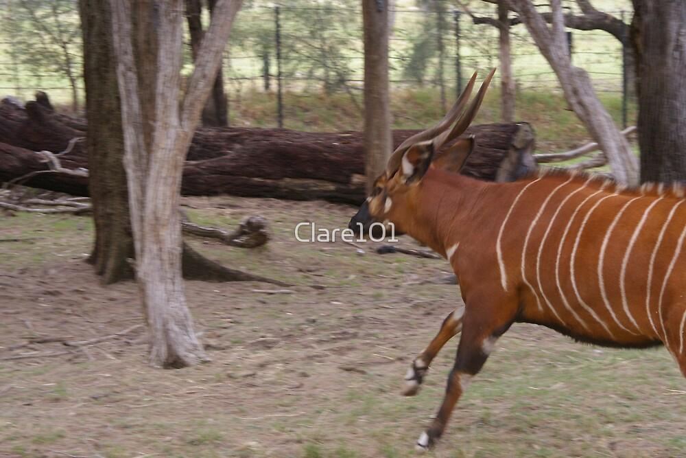Running Bongo by Clare101