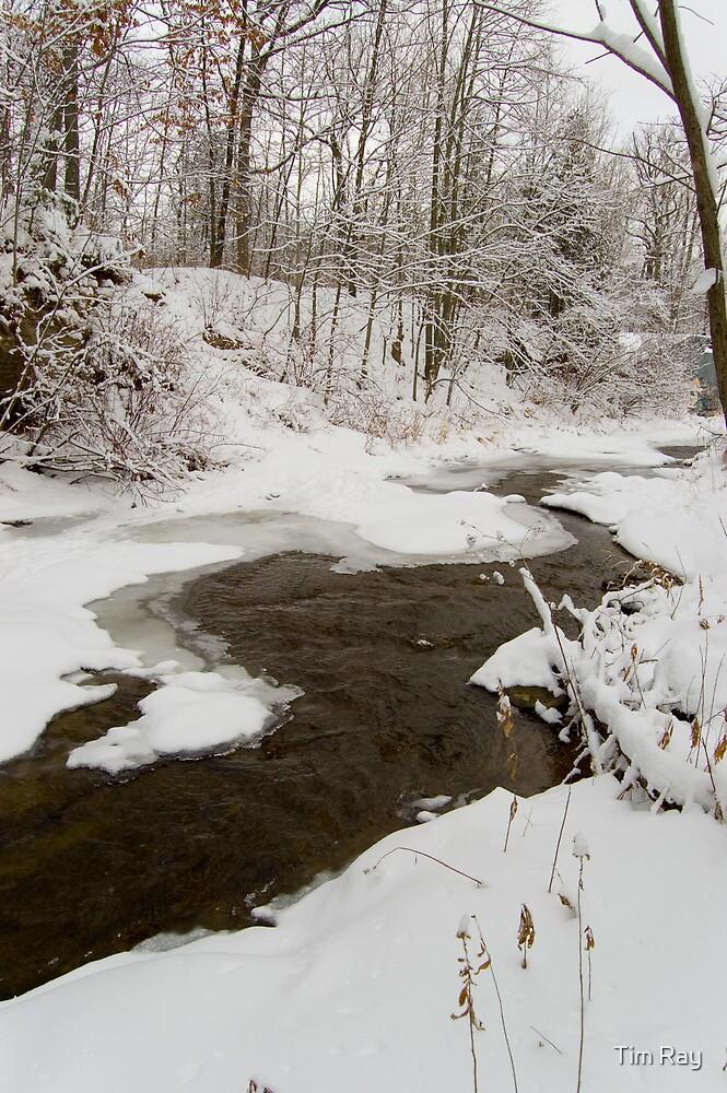 Winter Stream by Tim Ray
