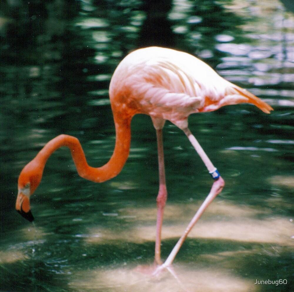 A Flamingo Dances by Junebug60