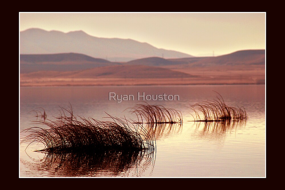 Bent Reeds at Sunset, Utah Lake by Ryan Houston