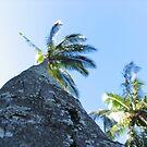 Palm I by J. Sprink