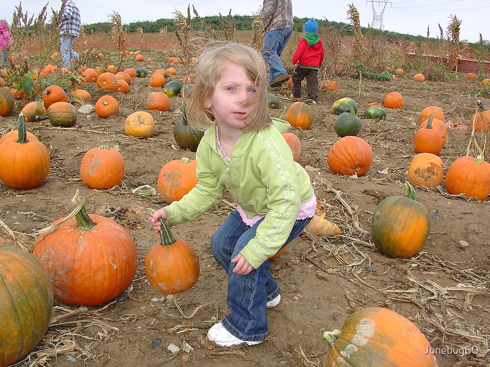 The Pumpkin I Want by Junebug60