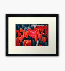 Tulip Field at Night Framed Print