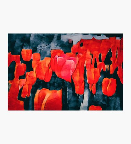 Tulip Field at Night Photographic Print