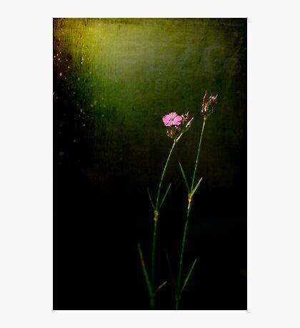 Seeking light Photographic Print