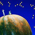 Star Watching On Pumpkin by Paul Ge