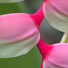 Exotic Charm - Sexy Pink Heliconia by Kerryn Madsen-Pietsch
