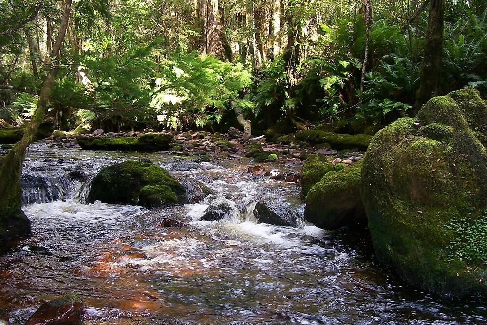 mossy stream by gaylene
