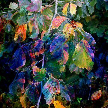 Autumn Blues by Sherif