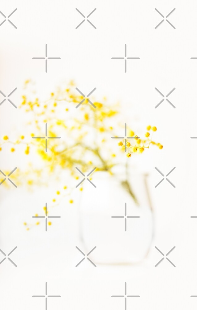 sweet mimosa  by Ingrid Beddoes
