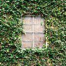 Window in the vines by Kristen Swanson