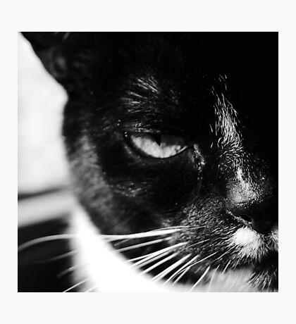 cat Jagoda black and white Photographic Print