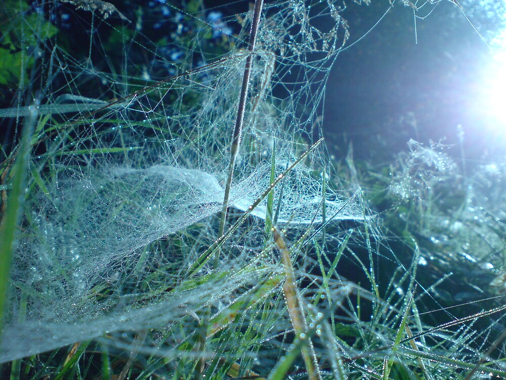 Sunlit Web by DanGoodwin
