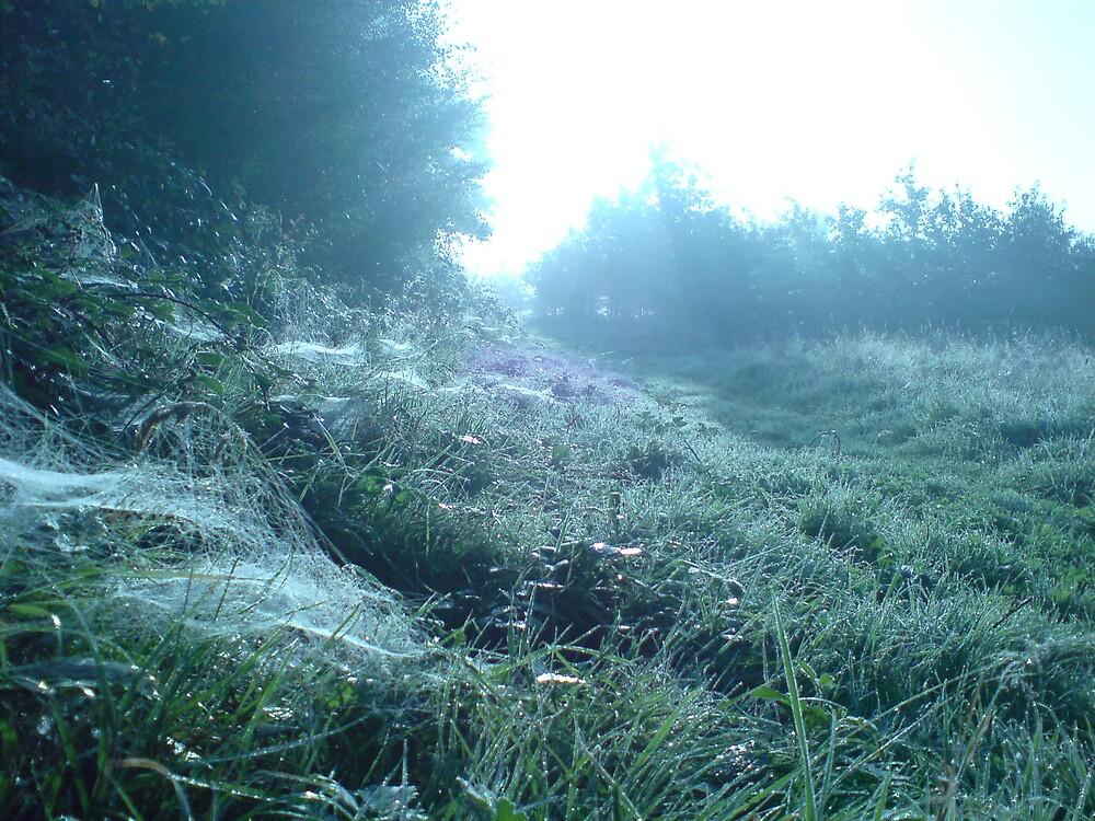 Dew Draped Morning by DanGoodwin